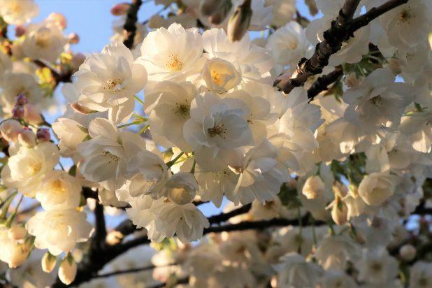 witte bloemen ten afscheid